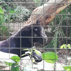 エクアドル・パンタナル動物園~南米に住む動物達が集結!~