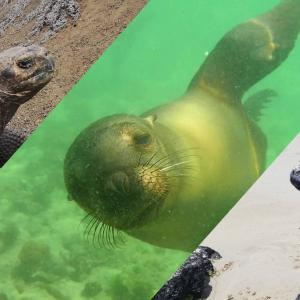 ガラパゴス諸島/イザベラ島観光~野生のアシカと泳いだ日~