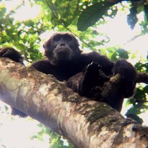 ウガンダ/キバレ国立公園~チンパンジーの住む森へ~