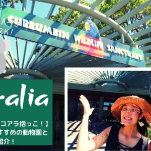 【オーストラリアのコアラ抱っこ!】コアラが抱けるおすすめの動物園とツアー紹介!
