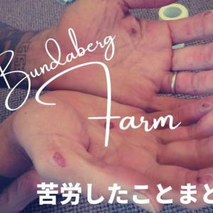 【体験談】バンダバーグのファーム生活で苦労したこと【解決策あり】