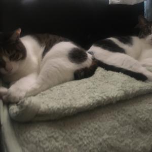 場所を分け合うことを覚えた猫たち