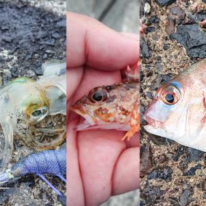友達と釣りを満喫していたら、10種目×100匹以上釣れた(サビキ含む)