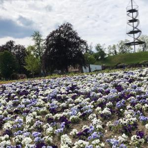 Höhenpark Killesberg/ へーエンパーク・キレスベルク〜シュトゥットガルトのお花がいっぱいの公園〜