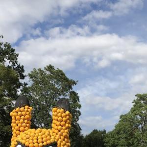 今年一番の巨大かぼちゃと可愛いこびとたち〜世界最大級のかぼちゃ祭り〜