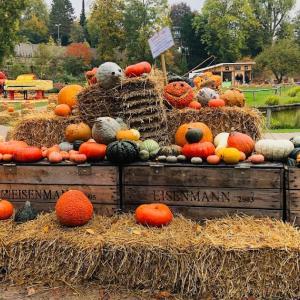 かぼちゃ祭りでかぼちゃを食す!〜世界最大級のかぼちゃ祭り〜