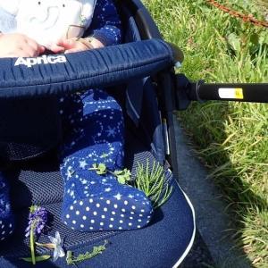 息子に雑草の名前を教えたい。【花言葉付き雑草マイ図鑑】