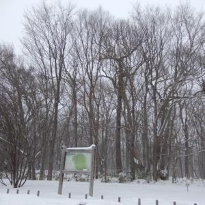 野幌森林公園内の百年記念塔前と大沢口前の駐車場が閉鎖【北海道江別市】