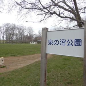 [江別花見スポット]「泉の沼公園」、広大な散歩コース、マガモが見れることも!【江別市】