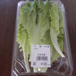 野幌野菜直売所で水耕栽培の野菜を販売、土栽培よりも栄養価が高い!?【江別市】