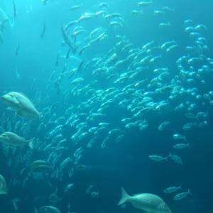 札幌市狸小路3丁目に「水族館」が2023年にオープン予定【札幌市】