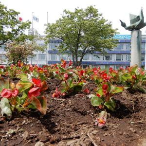 江別造園協会、江別市役所の花壇に1,000株を植栽【江別市】