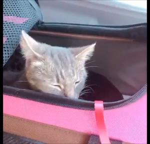 【猫癒し動画】ネコだって言いたいことがある!!(猫の気持ち)その2