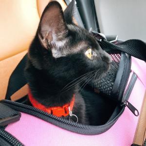 黒猫つばき ドキドキのドライブ!