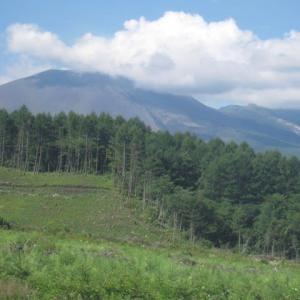 オゾンの風が吹いている北軽井沢の森に住んでみませんか