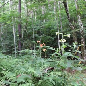 浅間高原の湧き水がン庭に流れてます