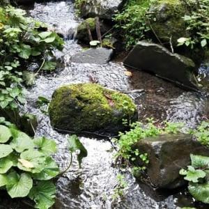 浅間高原北軽井沢でオゾンの中で暮らす2