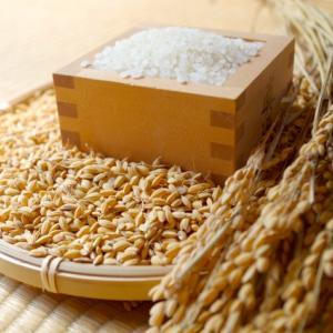 食材の味を最大限に引き出すシリーズ。初回は日本が誇る代表料理『白米』。
