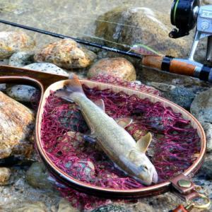 お山の川で夏の釣り