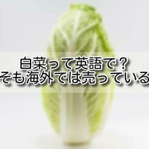 【イギリス 白菜】白菜って英語で?そもそも海外では売っているの?