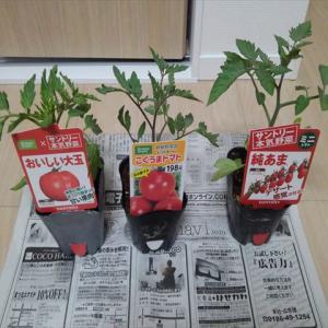 苗の購入 第1弾 トマト、ナス、畑わさび!?