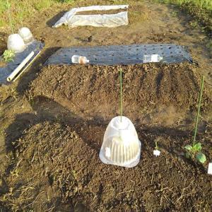 超密植ミニ菜園の種まき、植え付けがほぼ完了!その他、また新たな作物に手を・・・。