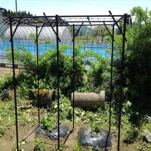 メロンの空中栽培!果物棚の組み立てと途中経過。