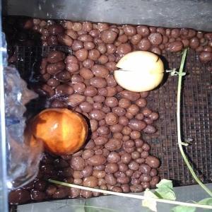 家庭菜園でアボカドの種からアボカドを育てよう!まずは、アボカドの基本を確認!