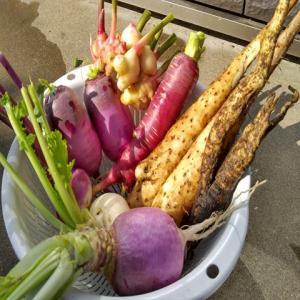 家庭菜園で今年チャレンジして良かった品種