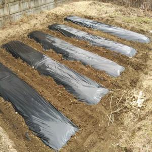 2021年3月最終週の家庭菜園作業(ジャガイモの植え付け、ビニールハウス設置)