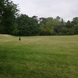 近所の公園がオープンした!!