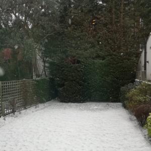 またもや雪、軽く鬱。
