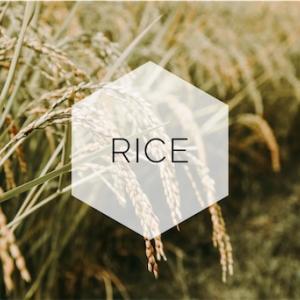 イギリスで日本のお米買うならこれ!