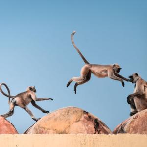 サルがコロナ感染者の血液サンプルを強奪して逃走!!