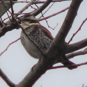 木が大きく高いのでこんな写真になってしまった龍神の木に居た鳥