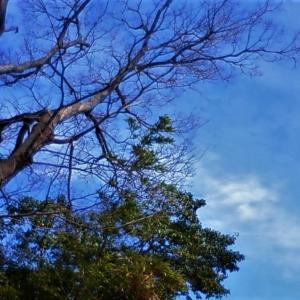 龍雲と龍神の木