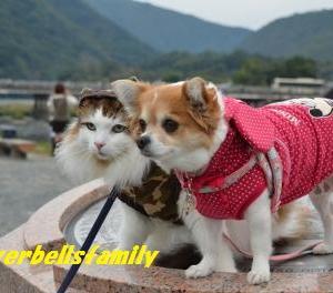 新婚旅行はどこ行こうかな?♪京都嵐山の楽しみ方♪足湯~嵐電嵐山駅♪