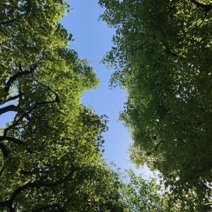 木々の間から幸せが覗いている、、、♪私は私を生きる♪