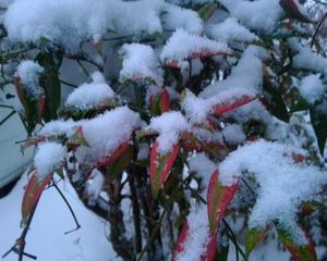 新型コロナと大雪で閉じ籠もり