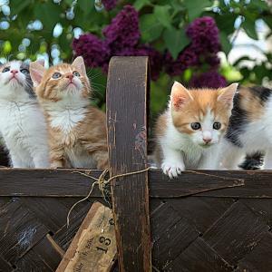 驚き!日本と違うタイのニャンコの性格!撮影方法、甘えんぼネコさん注意!