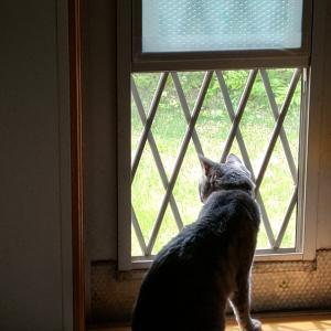 我が家の猫さん、お気に入りの場所。