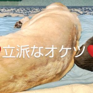 突然の愛犬の介護は寂しさと不安でいっぱい