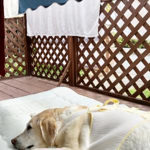 【生きてるだけで丸儲け♪】最後の猛暑日。お日さま浴びて免疫力アップ!