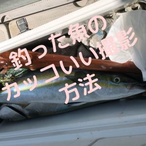 釣った魚のカッコいい写真の撮り方を解説