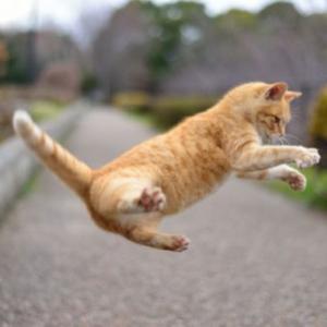 湯島の場所・行き方・アクセス 熊本県の猫島はインスタでも話題!