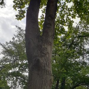 美しい木とまたお話ししました❤️