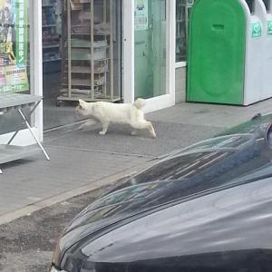 【画像】コンビニにこっそり忍び込んだ猫さんの末路wwww