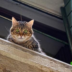 【画像】うちの猫が窓に付けるベッドで寛ぐせいか、草むしりしてるとお散歩の人から猫について聞かれるwww