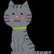 【画像】野良猫が家に住みついて3年経った