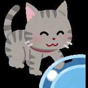 うちの猫の抜け毛で毛玉ボールを作って遊ばせてたら友達に笑われてしまった
